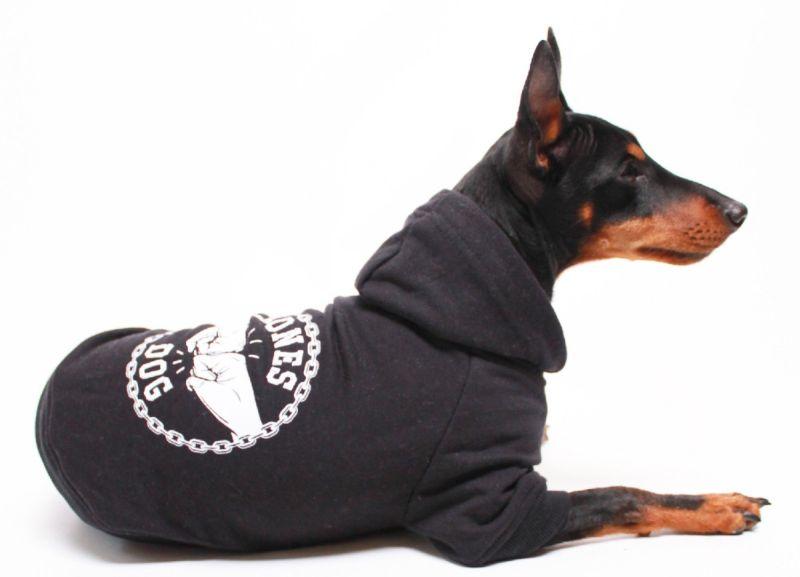 Kurtka dla psa – ochrona przed zimnem czy lans?